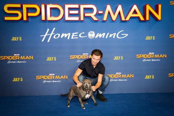 Человек-паук: Возвращение домой.  На фото:   Том Холланд